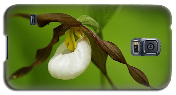 Galaxy S5 Case featuring the photograph Mountain Lady's Slipper by Ben Upham III