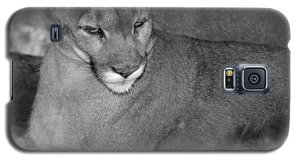Galaxy S5 Case featuring the photograph Mountain Lion - Sonoran Desert Museum  by Donna Greene