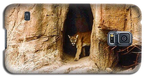 Mountain Lion In The Desert Galaxy S5 Case
