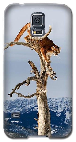 Mountain Lion In Tree Galaxy S5 Case