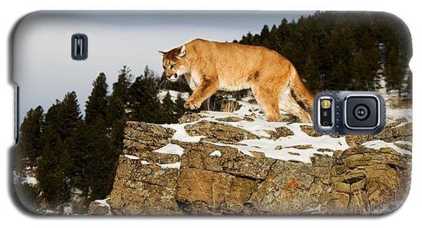 Mountain Lion On Rocks Galaxy S5 Case