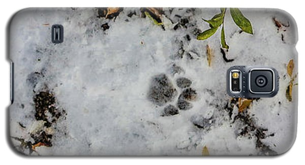 Mountain Lion Tracks In Snow Galaxy S5 Case