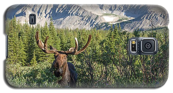 Mountain Moose Galaxy S5 Case by Chris Scroggins