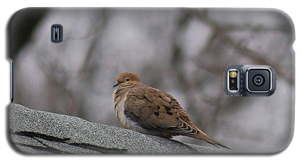 Galaxy S5 Case featuring the photograph Mourning Dove 20120318_1a by Tina Hopkins