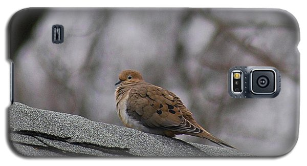 Mourning Dove 20120318_1a Galaxy S5 Case