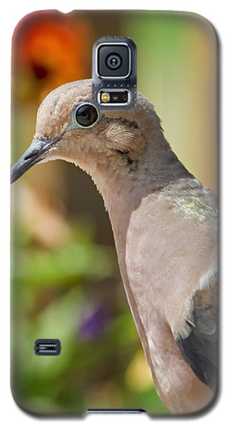 Mourning Dove And Flowers Galaxy S5 Case