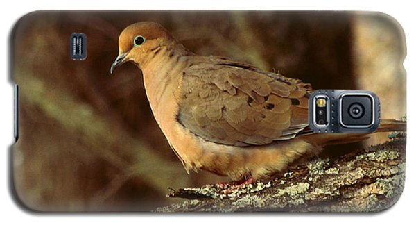 Mourning Dove At Dusk Galaxy S5 Case