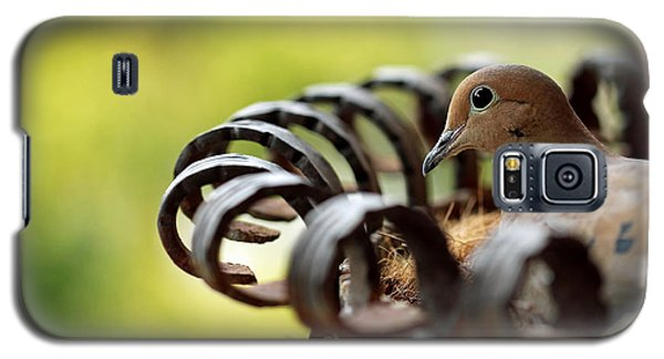 Mourning Dove In A Flower Planter Galaxy S5 Case by Debbie Oppermann