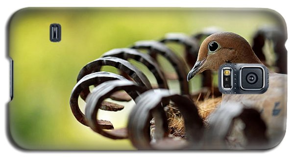 Galaxy S5 Case featuring the photograph Mourning Dove In A Flower Planter by Debbie Oppermann