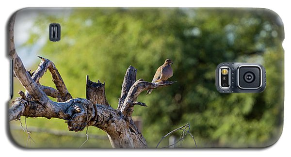 Mourning Dove In Old Tree Galaxy S5 Case
