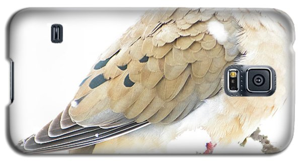 Mourning Dove, Snowy Morning Galaxy S5 Case