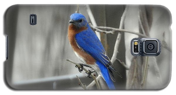 Galaxy S5 Case featuring the photograph Mr. Bluebird by Brenda Bostic