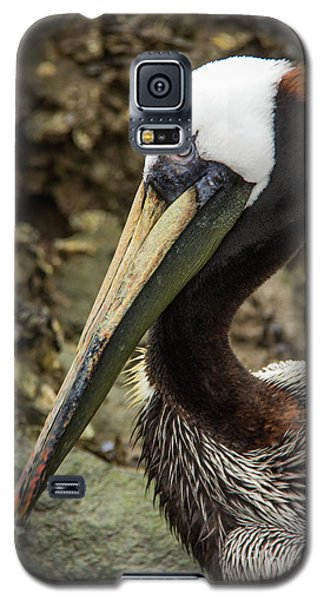 Mr. Cool Wildlife Art By Kaylyn Franks Galaxy S5 Case