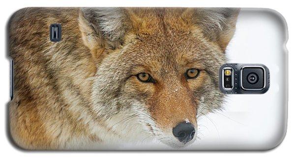 Mr. Coyote Galaxy S5 Case