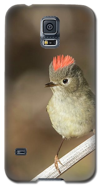 Galaxy S5 Case featuring the photograph Mr Kinglet  by Mircea Costina Photography