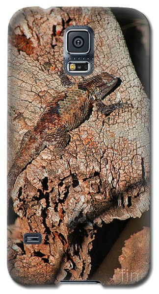 Galaxy S5 Case featuring the photograph Mr. Lizard - Tucson Arizona by Donna Greene