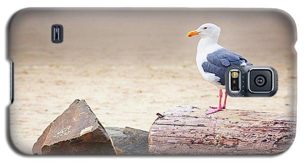 Mr. Seagull Galaxy S5 Case
