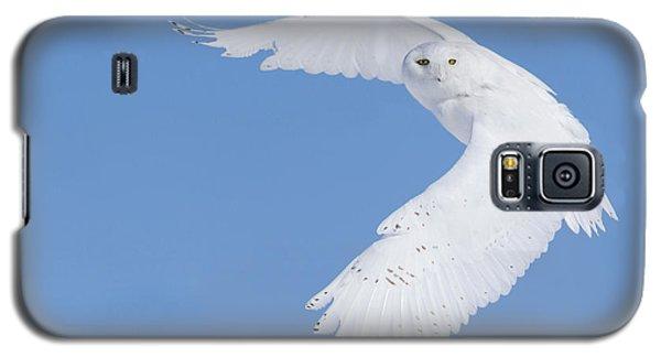 Mr Snowy Owl Galaxy S5 Case by Mircea Costina Photography
