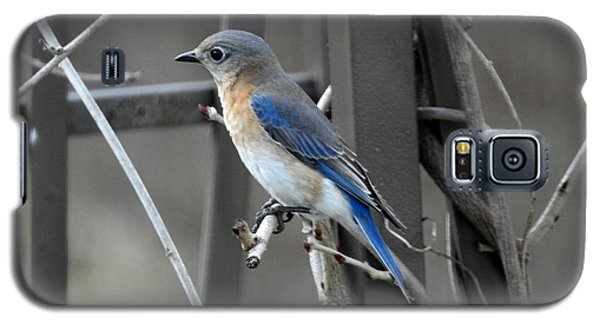Galaxy S5 Case featuring the photograph Mrs. Bluebird by Brenda Bostic
