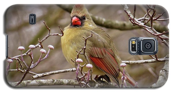 Galaxy S5 Case featuring the photograph Mrs Cardinal by Douglas Stucky