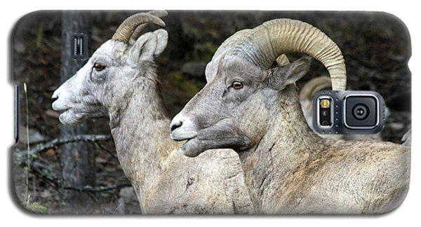 Mt Sheep  Galaxy S5 Case