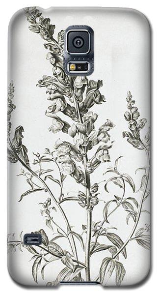 Mufle De Veau Galaxy S5 Case by Gerard van Spaendonck