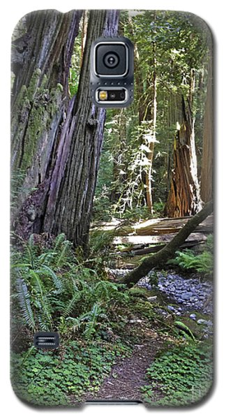 Muir Woods Beauty Galaxy S5 Case