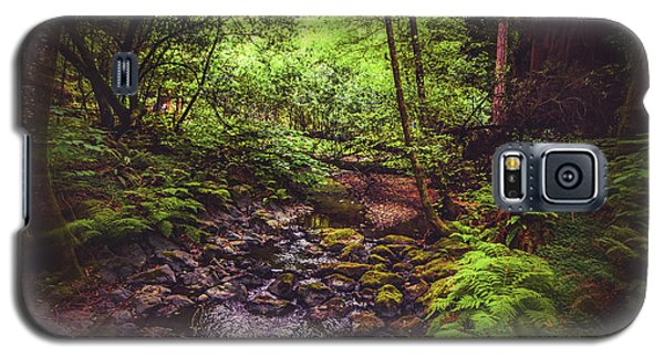 Galaxy S5 Case featuring the photograph Muir Woods No. 3 by Laura DAddona