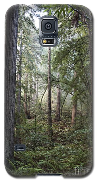 Galaxy S5 Case featuring the photograph Muir Woods Tranquility by Sandra Bronstein