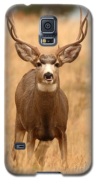 Galaxy S5 Case featuring the photograph Mule Deer Buck Showing His Thoughts by Max Allen