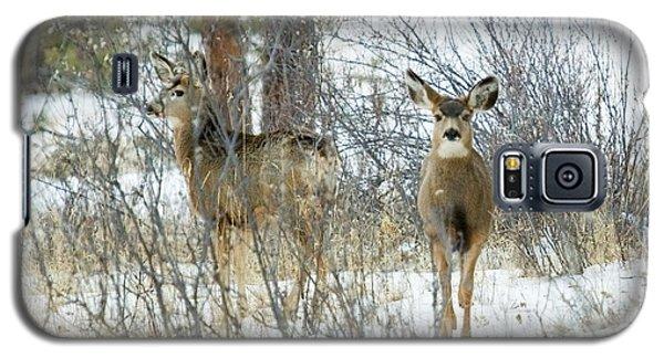 Mule Deer Does In Snow Galaxy S5 Case