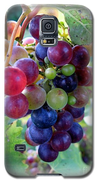 Multicolor Grapes Galaxy S5 Case by Carol Sweetwood
