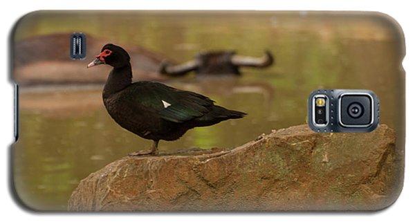 Muscovy Duck Galaxy S5 Case
