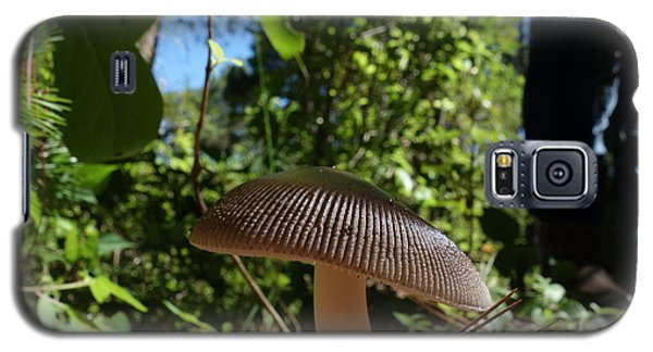 Galaxy S5 Case featuring the photograph Mushroom by Matthew Bamberg