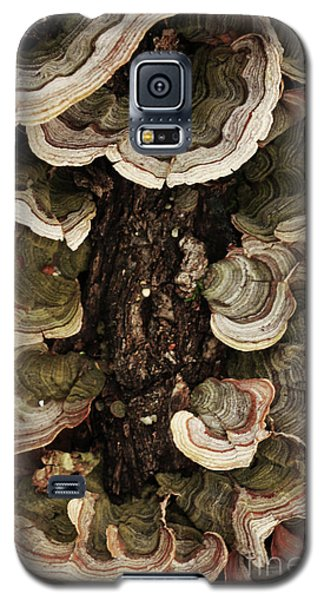 Galaxy S5 Case featuring the photograph Mushroom Shells By The Lake Shore by Kim Henderson