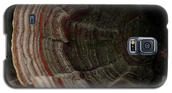 Galaxy S5 Case featuring the photograph Mushroom Shells by Kim Henderson