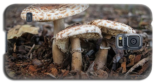 Galaxy S5 Case featuring the photograph Mushroom Trio Macrolepiota Procera by Frank Wilson