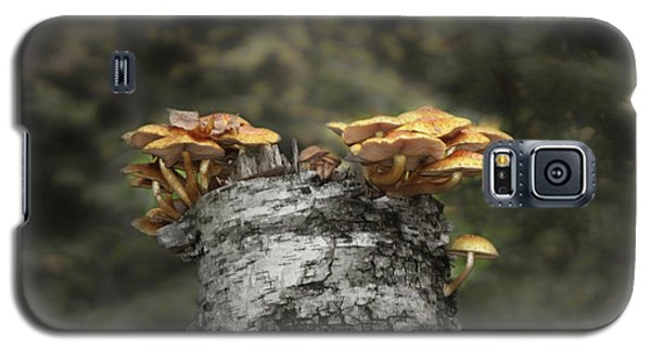 Mushrooms Atop Birch Galaxy S5 Case