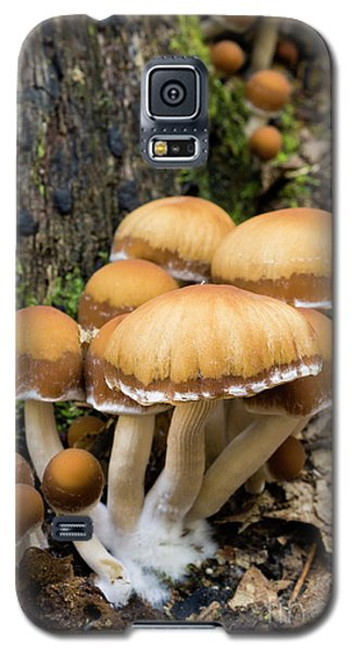 Galaxy S5 Case featuring the photograph Mushrooms - D009959 by Daniel Dempster