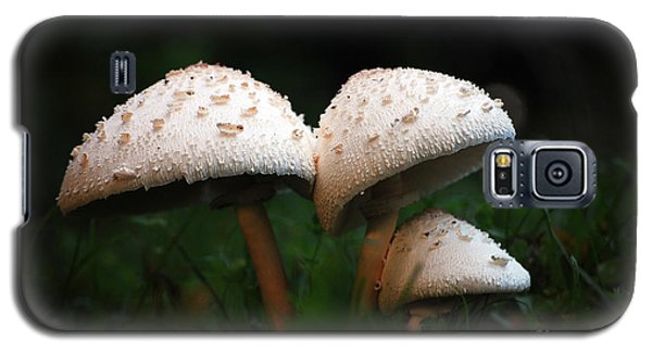 Mushrooms In The Morning Galaxy S5 Case by Robert Meanor