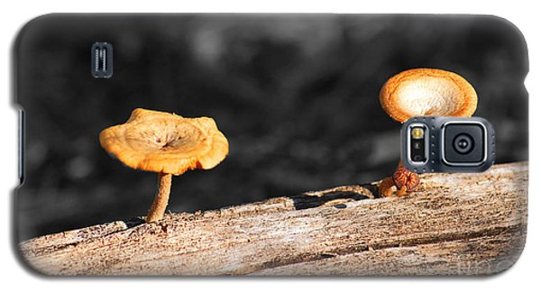 Galaxy S5 Case featuring the photograph Mushrooms On A Branch by Donna Greene