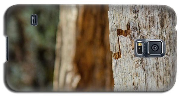 Galaxy S5 Case featuring the photograph Music Is Everywhere by Paul Noble