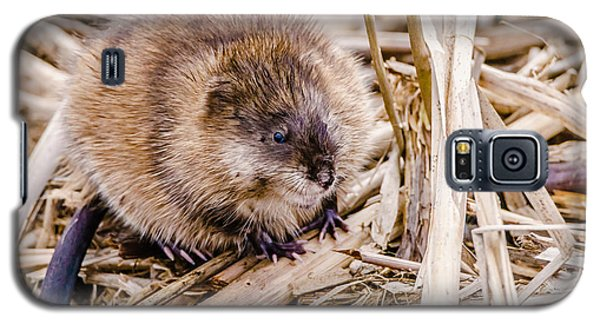 Muskrat Ball Galaxy S5 Case