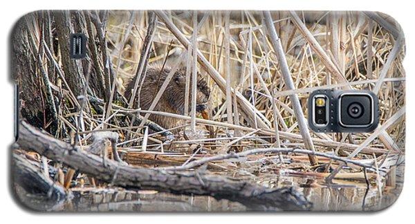 Muskrat Eating A Fish Galaxy S5 Case