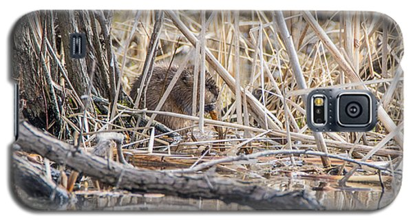 Muskrat Eating A Fish Galaxy S5 Case