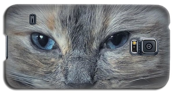 Mustachioed Cat Galaxy S5 Case by Karen Stahlros