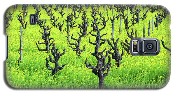 Mustard Flowers In The Vineyards Galaxy S5 Case