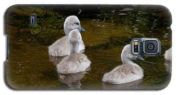 Mute Swan Babes Galaxy S5 Case