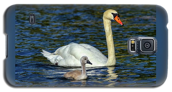 Mute Swan, Cygnus Olor, Mother And Baby Galaxy S5 Case