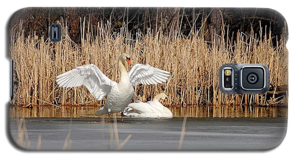 Galaxy S5 Case featuring the photograph Spring Arrival Swans by Debbie Stahre